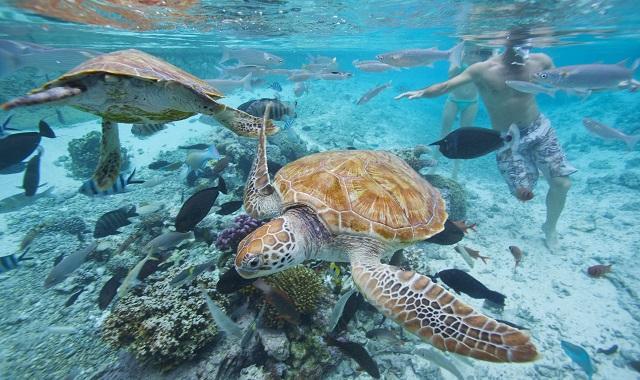 Tahiti wildlife
