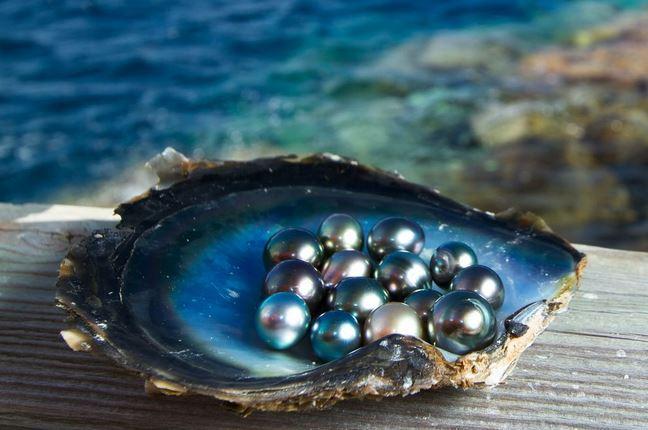 Black Pearls Tahiti
